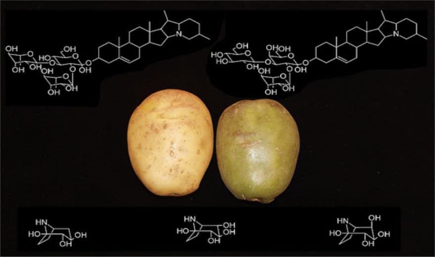 #012 Är potatis och potatisväxter bra eller dåligt?