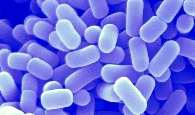 Avsnitt 40  Probiotika – hitta din personliga kombination av kosttillskott