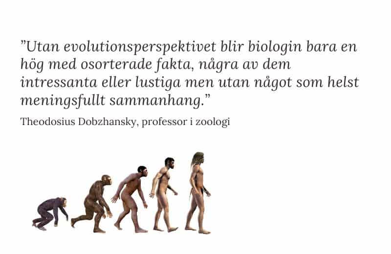 Evolutionsperspektiv på hälsa – vad innebär det?